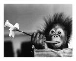Hair Raising Experience