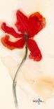 Tulipe III