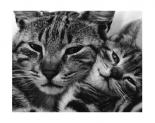 Poppa Puss