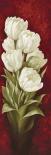 Magnificent Tulips I