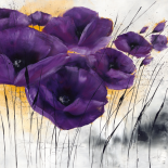 Pavot violet IV