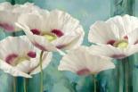 Tasmanian Poppies II