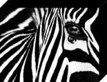 Black & White II