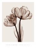 Parrot Tulips II